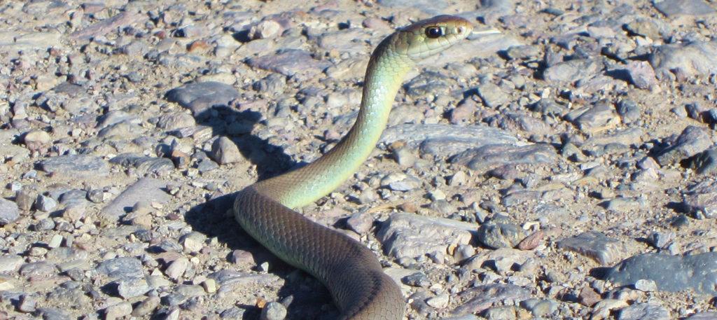 Rye Creek Rim Wildlife