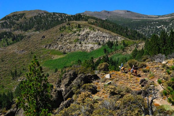 Horseback Riding in Mount Rose Wilderness